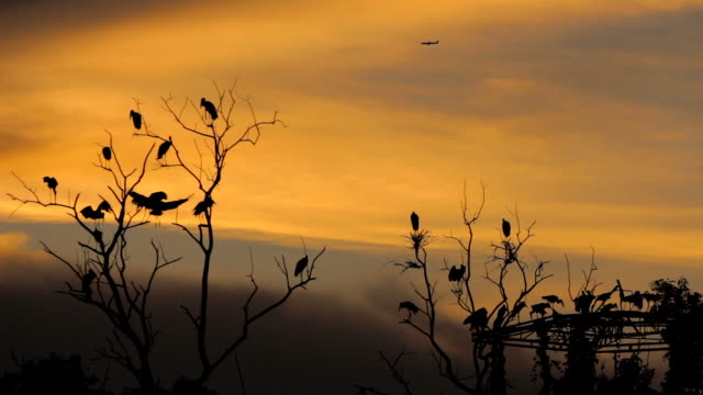 sunset with birds and airplane. - formation flying stock videos & royalty-free footage