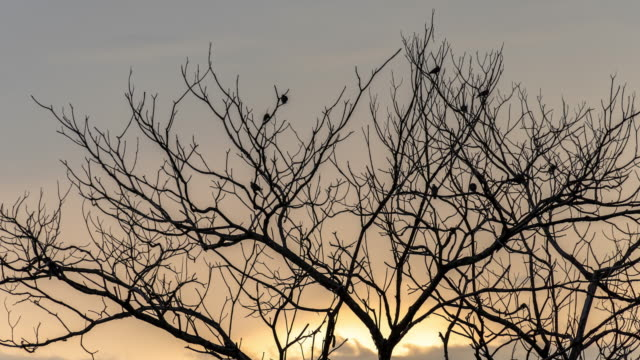 sunset with birds - bare tree stock videos & royalty-free footage