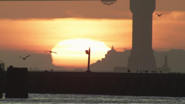 cu sunset with brown  pelicans flying through frame   - utfällda vingar bildbanksvideor och videomaterial från bakom kulisserna