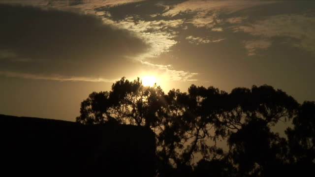 ms sunset with silhouette of tree, ming tombs, china - ming tombs stock videos and b-roll footage