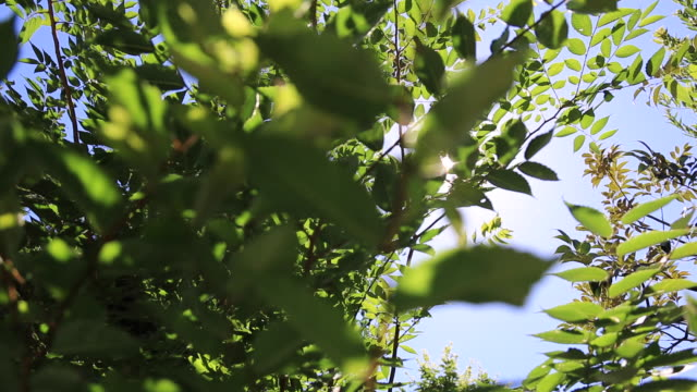 Sunshine and green