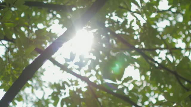 太陽から緑の葉