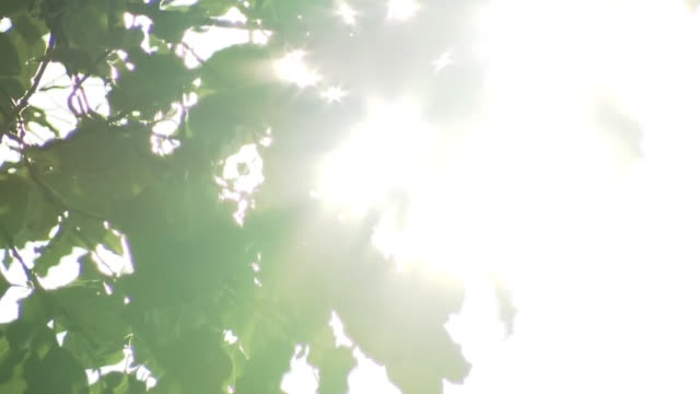 sunshine through leaves, kumamoto, japan - summer heat stock videos & royalty-free footage