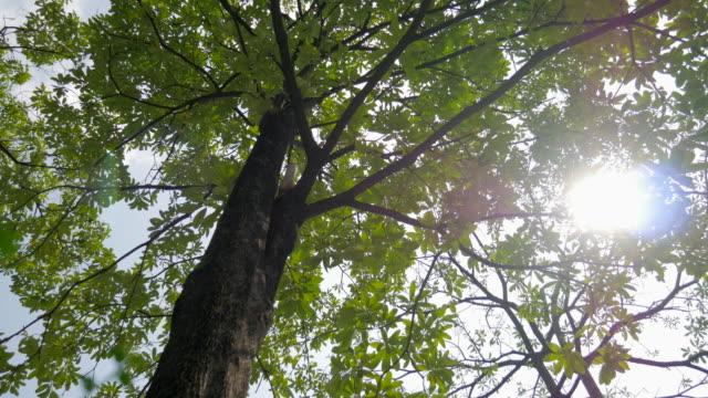 Sunshine Through Leaves Slider Shot