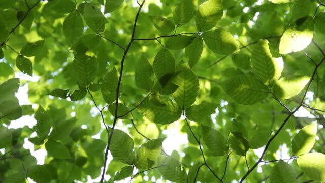 Sunshine through leaves