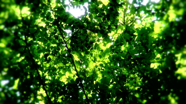 sunshine through leaves - sunbeam stock videos & royalty-free footage