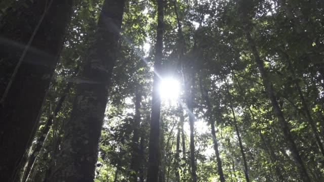 Sunshine through rainforest
