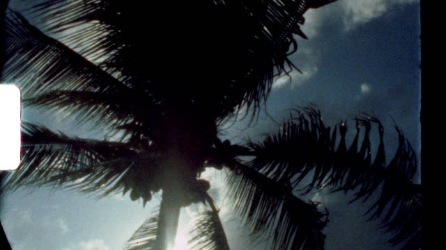 super 8 film montage of a remote resort in the caribbean - tropical tree stock videos & royalty-free footage