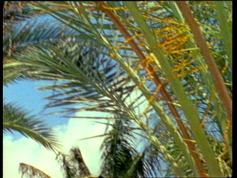super 8 montage beach with palm trees docks - tropical tree stock videos & royalty-free footage