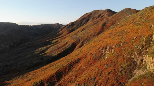 super bloom' of wild poppies blanket the hills of walker canyon on march 12, 2019 near lake elsinore, california. heavier than normal winter rains in... - canyon lake stock videos & royalty-free footage
