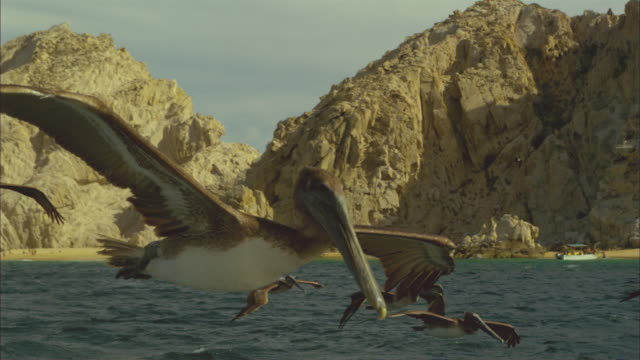 super slo mo group of brown pelicans flying and gliding very close to camera  - utfällda vingar bildbanksvideor och videomaterial från bakom kulisserna