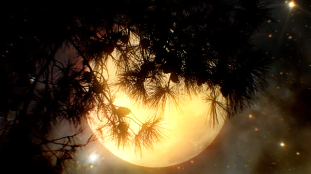 super moon and tree (loopable) - moon stock videos & royalty-free footage