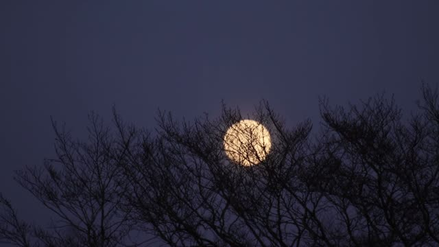 super moon through trees in norfolk, england. - moon stock videos & royalty-free footage
