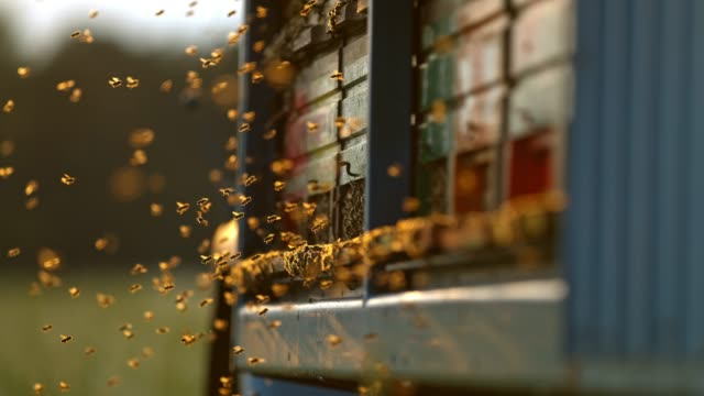 vídeos de stock e filmes b-roll de cu super slow motion bees flying,hovering at beehive - abelha
