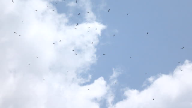 super slow motion bird in the sky - birds flying in v formation stock videos and b-roll footage