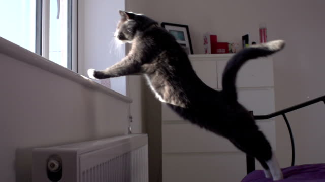 super slow motion hd: grey cat jumping onto window ledge - domestic cat stock videos and b-roll footage