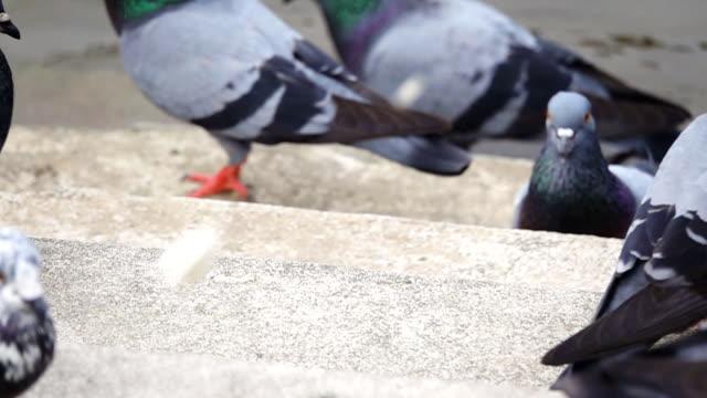 Super Slow Motion HD: duiven