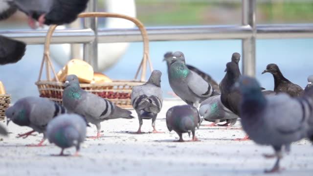 vídeos de stock e filmes b-roll de super slow motion hd:pigeons eating. - gelo picado