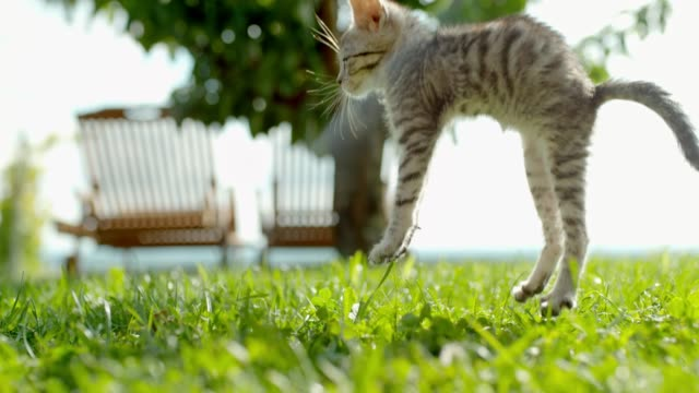 ms super slow motion kitten falling onto sunny green grass - exhilaration stock videos & royalty-free footage