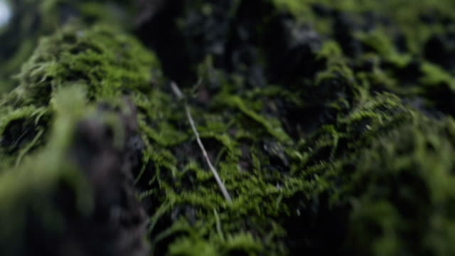 super slow motion : moss - muschio video stock e b–roll
