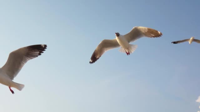 super slow motion seagull flying - seagull stock videos and b-roll footage