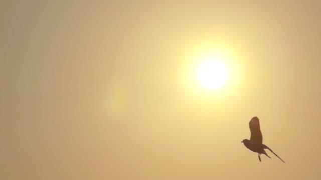 スーパー スロー モーション カモメの飛行 - チョウ点の映像素材/bロール