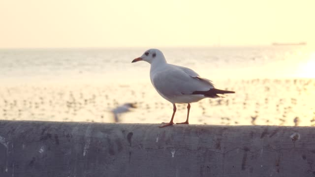 super slow motion seagull flying - seagull stock videos & royalty-free footage