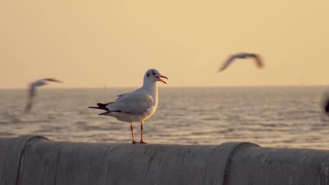 super slow motion seagull flying - bocca di animale video stock e b–roll