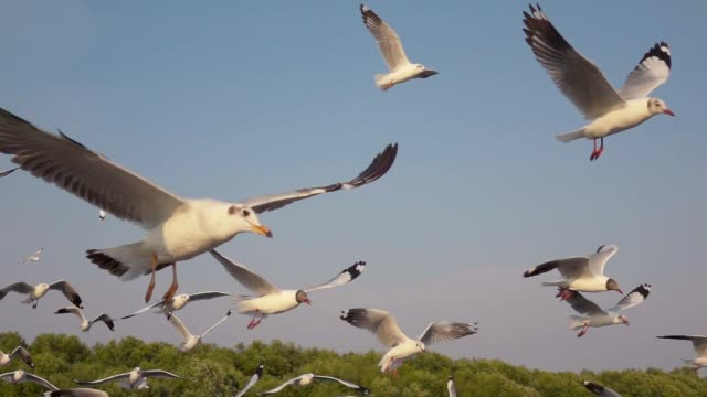super slow motion seagull flying - gabbiano video stock e b–roll