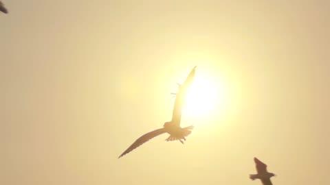 super-zeitlupe möwe fliegen - sunset stock-videos und b-roll-filmmaterial