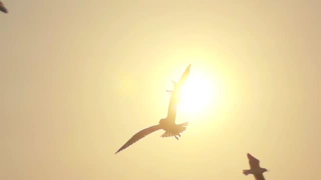 stockvideo's en b-roll-footage met super slowmotion seagull vliegen - zonsondergang