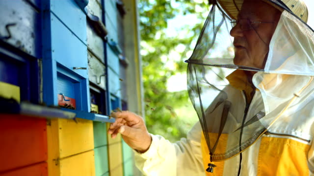 HD Super Slow-Mo: Beekeeper At Work