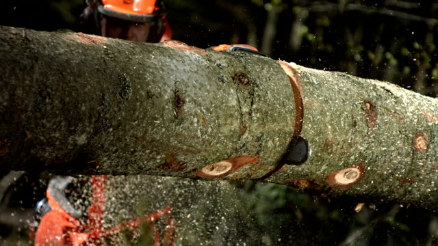 hd super slow-mo: bucking felled tree - forestry industry stock videos & royalty-free footage