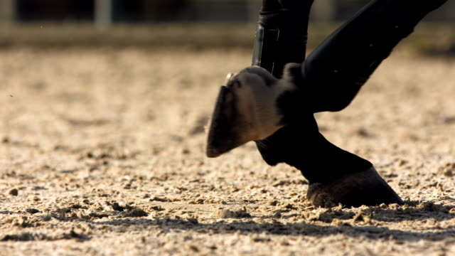 hd 超スローモーション: close -up shot of horse hooves - 乗馬点の映像素材/bロール