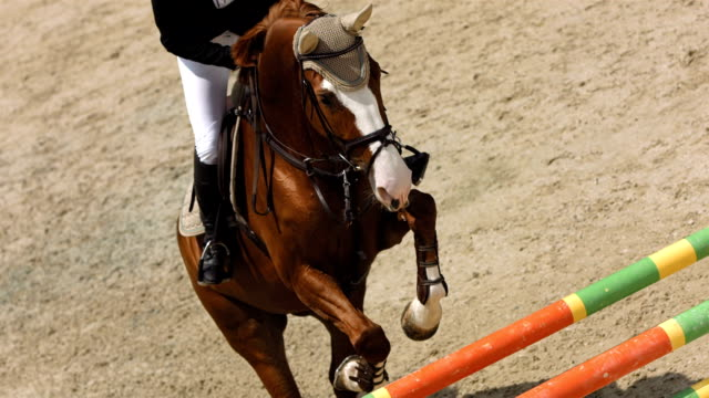 hd super slow-mo: competitor in a show jumping class - horseback riding stock videos & royalty-free footage