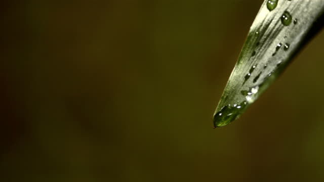hd super slow-mo: dew drops dripping over leaf - dew stock videos & royalty-free footage