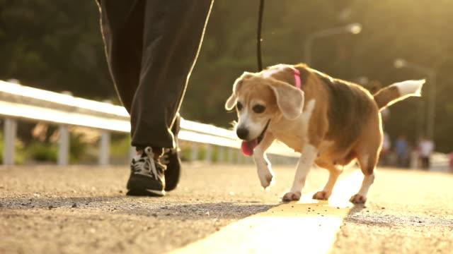 vídeos de stock e filmes b-roll de super slow-mo dog running with people - trela de animal de estimação