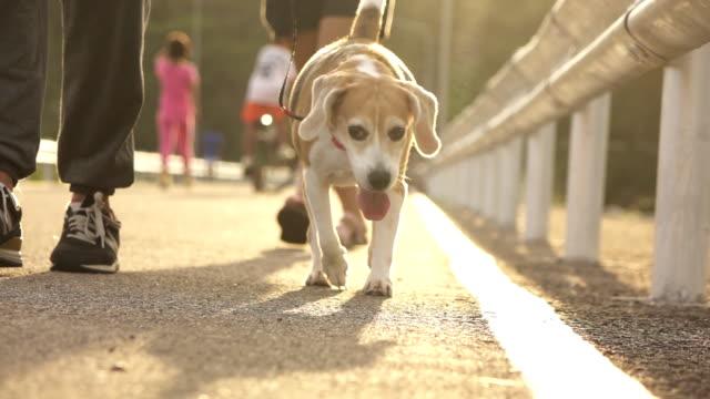 Super Slow-Mo-Hund läuft mit Menschen