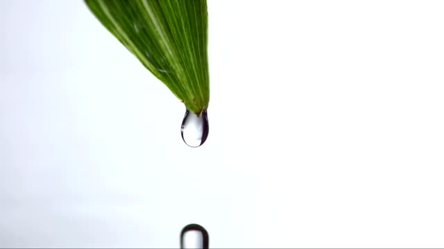 HD Super Slow-Mo: Drop Dripping From A Leaf