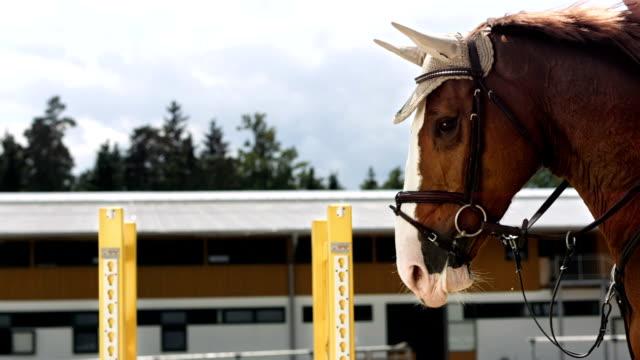hd 超スローモーション: 雌馬のジャンプのライダー oxer 以上 - 乗馬点の映像素材/bロール