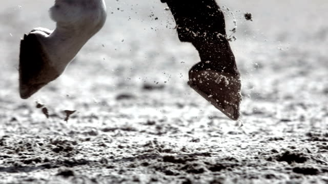 HD Super Slow-Mo: Horse Hooves Galloping And Kicking Sand