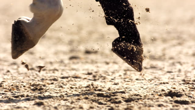 hd super slow-mo: horse hooves kicking sand in enclosure - horse racing stock videos & royalty-free footage