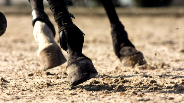 stockvideo's en b-roll-footage met hd super slow-mo: horse hooves kicking sand - recreatief paardrijden