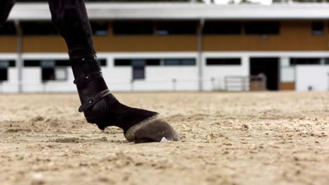 hd super slow-mo: horse hunter kicking sand - galoppera bildbanksvideor och videomaterial från bakom kulisserna