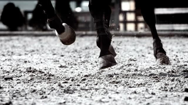 hd super slow-mo: horse kicking sand - galoppera bildbanksvideor och videomaterial från bakom kulisserna