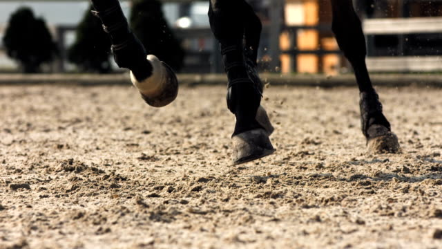 hd super slow-mo: horse kicking sand while running - horse racing stock videos & royalty-free footage