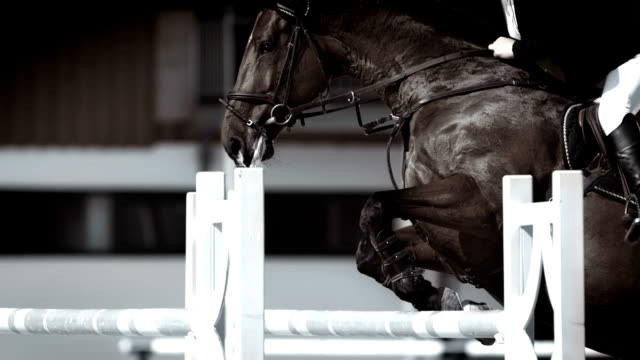 hd super slow-mo: horse rider jumping over oxer - all horse riding stock videos & royalty-free footage