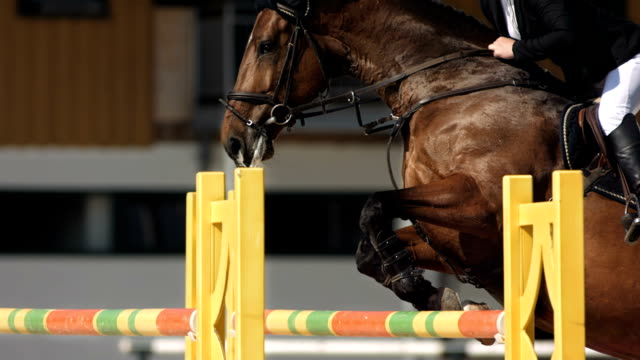 hd super slow-mo: horse rider jumping over square oxer - horse stock videos & royalty-free footage
