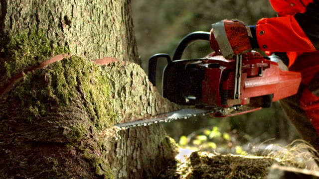 hd super slow-mo: logger cutting the notch - fallen tree stock videos and b-roll footage