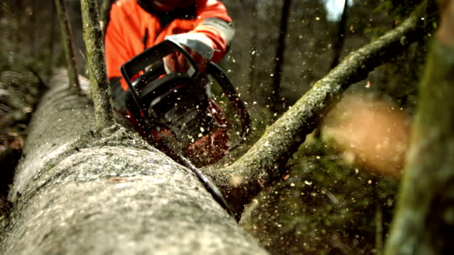 hd super slow-mo: logger limbing a tree - hand saw stock videos and b-roll footage